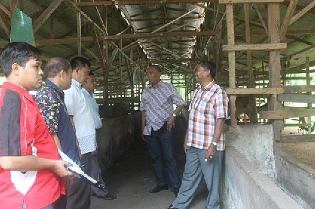 Berpotensi, Effendi Janji Majukan Peternakan Di Kota Dumai
