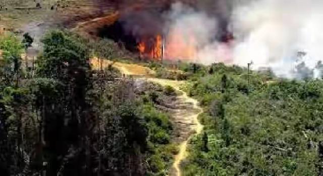 Kebakaran Hutan dan Lahan di Riau, Jokowi Diminta Tegas Dan Serius Selesaikan