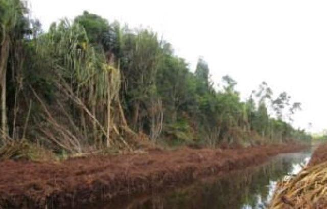 Agar Kadar Air Gambut Selalu Basah, Pemkab Meranti Bangun Sekat Kanal