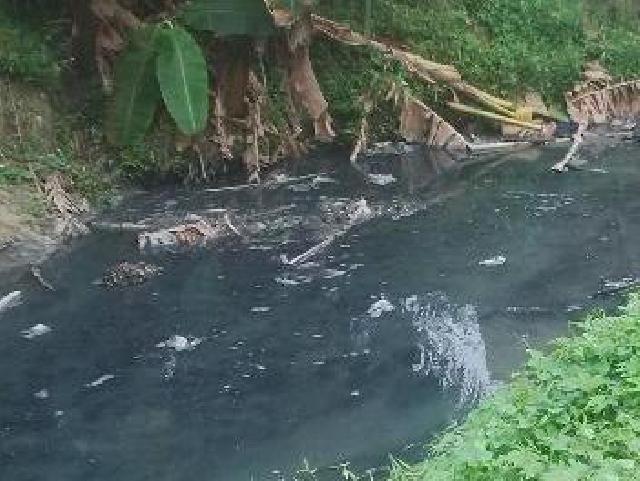 Airnya Berwarna Hitam dan Berbau Busuk di Anak Sungai Simpang Kanan, Ini Dugaan Penyebabnya