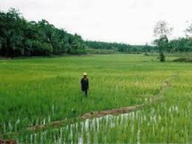 Infrastruktur Pertanian Meranti Masih Perlu Pembenahan
