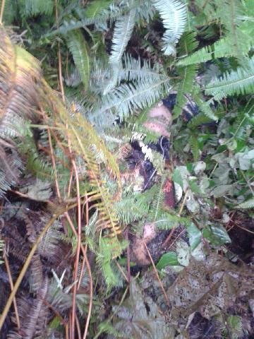 Dikabarkan Hilang, Pria Asal Aceh Ini Ditemukan Tewas di Dalam Kebun di Keritang