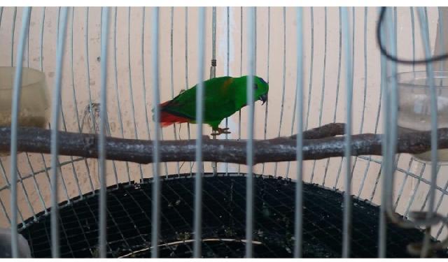 Populasi Burung Khas Riau Terancam Punah