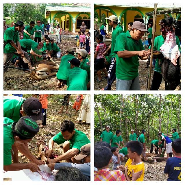 Idul Adha 1440 H, Masjid Al Ikhlas Desa Bukit Petaling Laksanakan Pemotongan Hewan Kurban