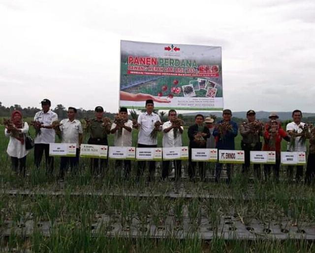 Wakil 1 DPRD Kuansing Dampingi Bupati H Mursini Panen Bawang Merah