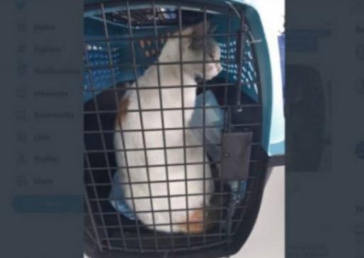 Penyeludup Narkoba ke Lapas Ditangkap! Pelakunya Kucing Ini