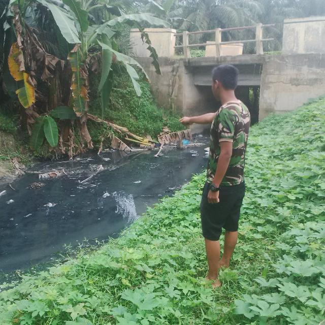 PKS PT SKL Simpang Kanan Diduga Buang Limbah Ke Anak Sungai